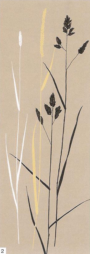 Obrazy  DES Oatmeal Meadow Grass, Glamour