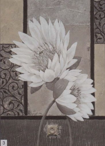Obrazy  CA White Waterlily, Claudia Ancilotti
