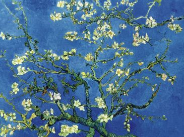 Reprodukce - Impresionismus - Branch of an almond tree, Vincent van Gogh